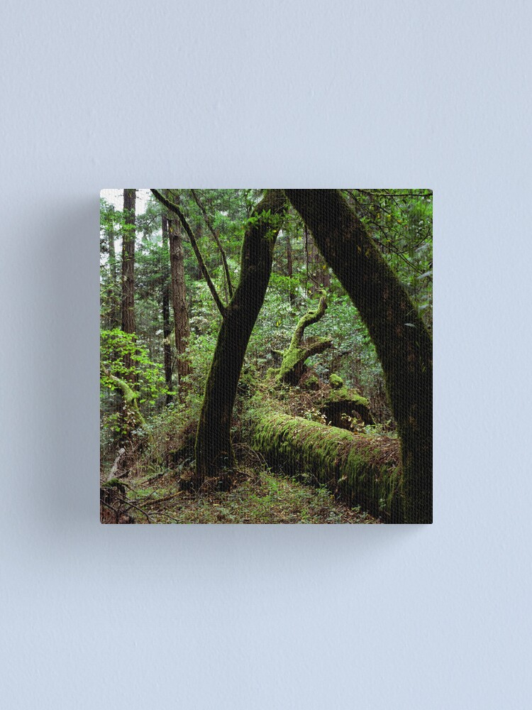 Alternate view of Dipsea Trail, Muir Woods National Monument Canvas Print