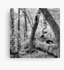 Dipsea Trail, Muir Woods National Monument Canvas Print