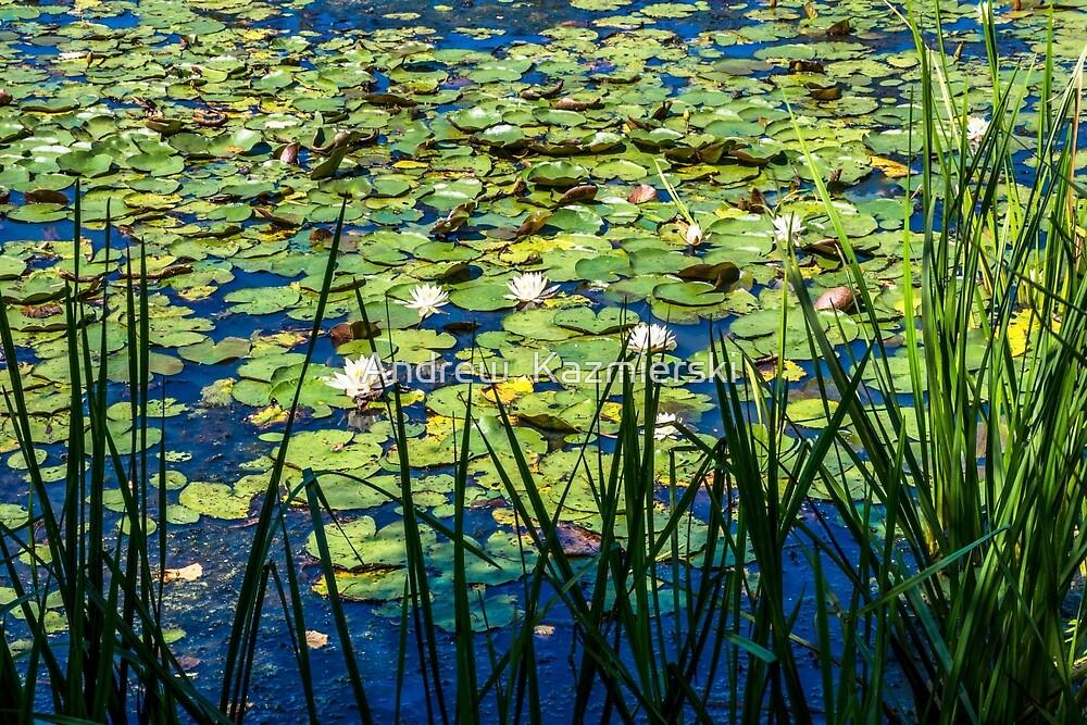 Lilly Pad Pond by andykazie