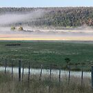 Misty Morning Ranch by helenlloyd