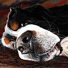 Sleeping Does Lie by Liane Weyers