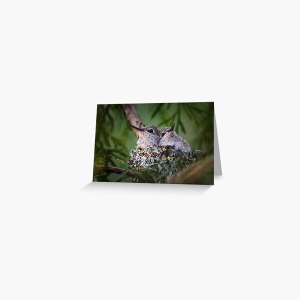 Bosom Buddies -- Anna's Hummingbird Nestlings Greeting Card