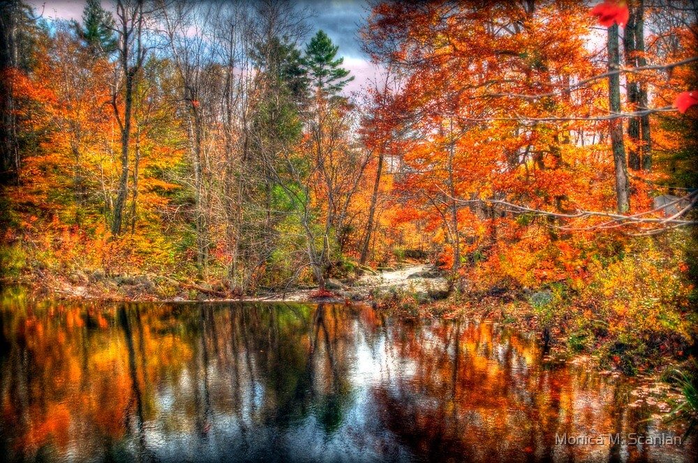 Autumn Stream in the Park by Monica M. Scanlan