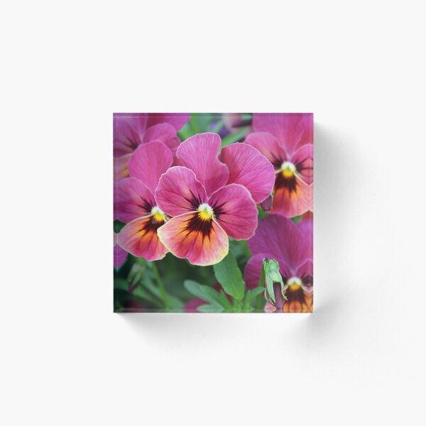 European Garden - Pink Pansy Acrylic Block