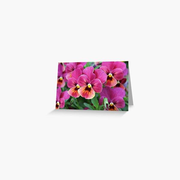 European Garden - Pink Pansy Greeting Card