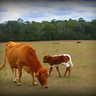 Big Red & Her Newborn Calf by Debbie Robbins