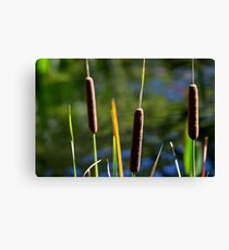 Cattails at the edge of the pond Canvas Print