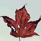 Autumn   Maple Leaf by Tamara Brandy