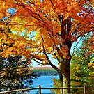 Fall Colors up North, Michigan by F.  Kevin  Wynkoop