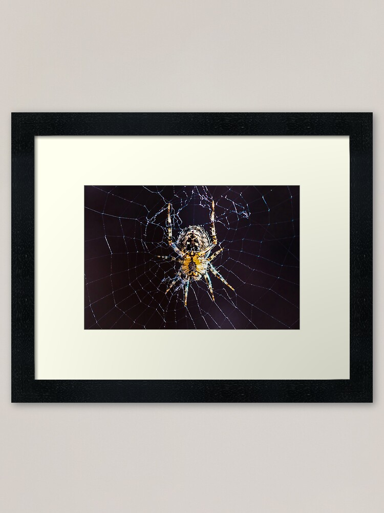 Spider Web Framed Art Print By Fasbytes Redbubble