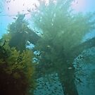UNDERWATER ROUTE 77 ~ CEMENT WRECK by NICK COBURN PHILLIPS