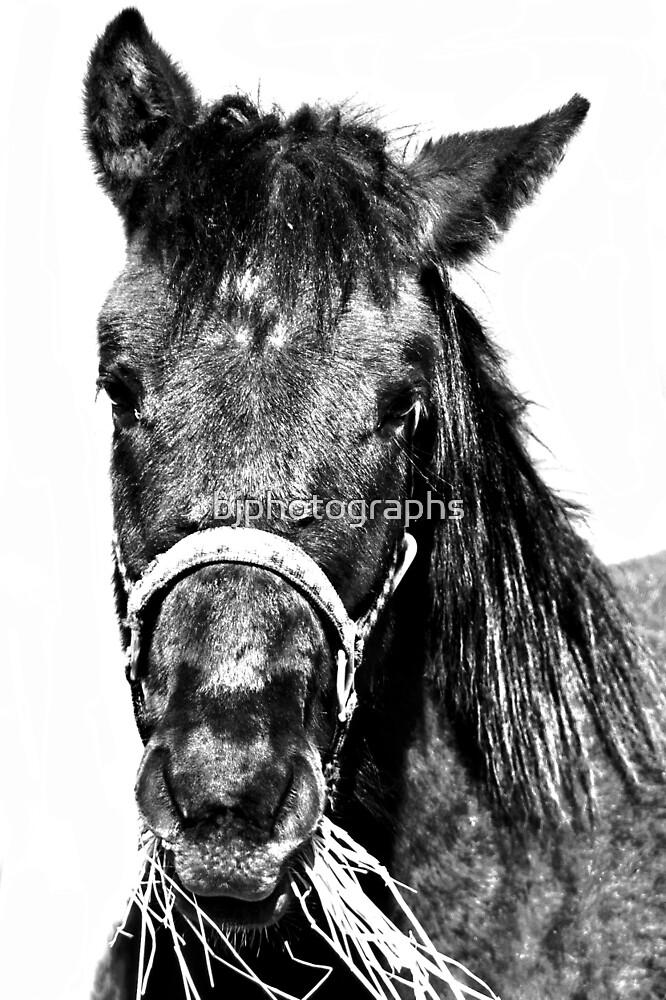 Horse head by bjphotographs