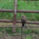 Bird on Fence by Donald Salsbury