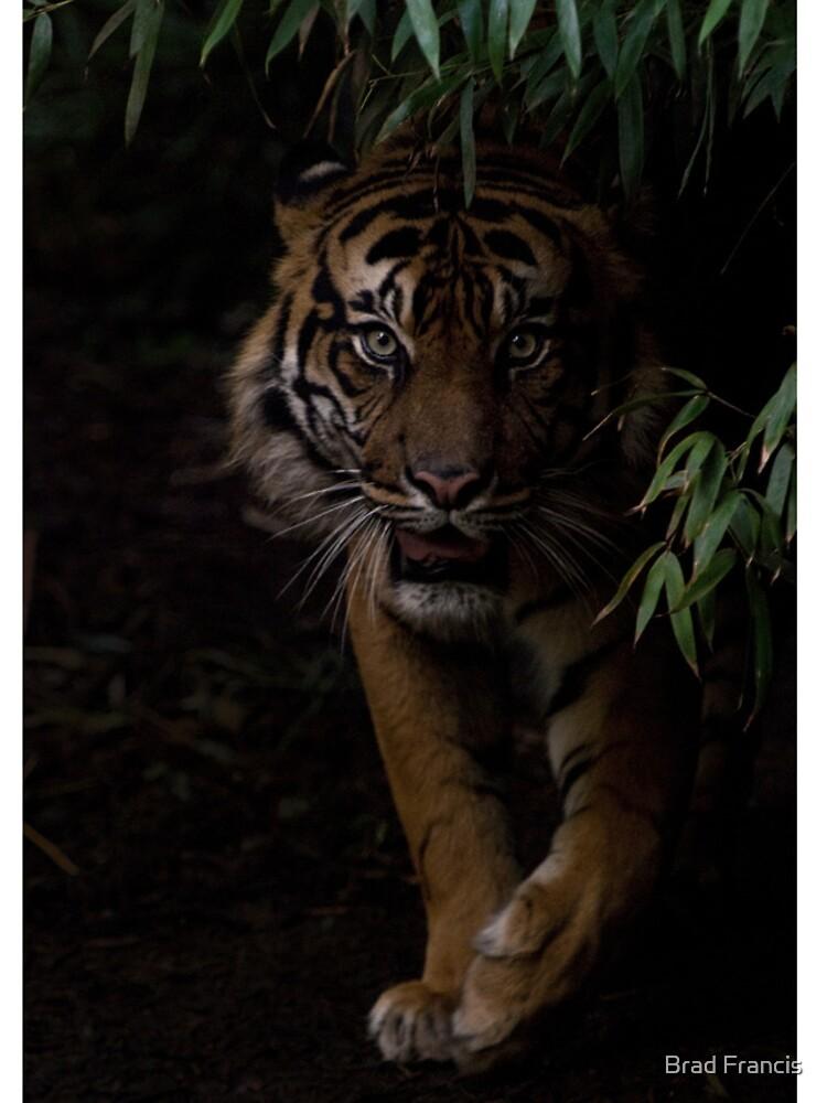Sumatran Tiger iPhone Cover by bfra