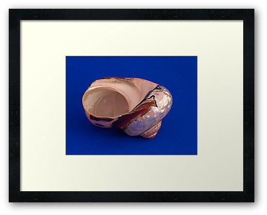 Sea Shell on Blue by Robert Gipson