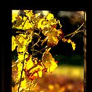 Autumn through the window by Alan Mattison