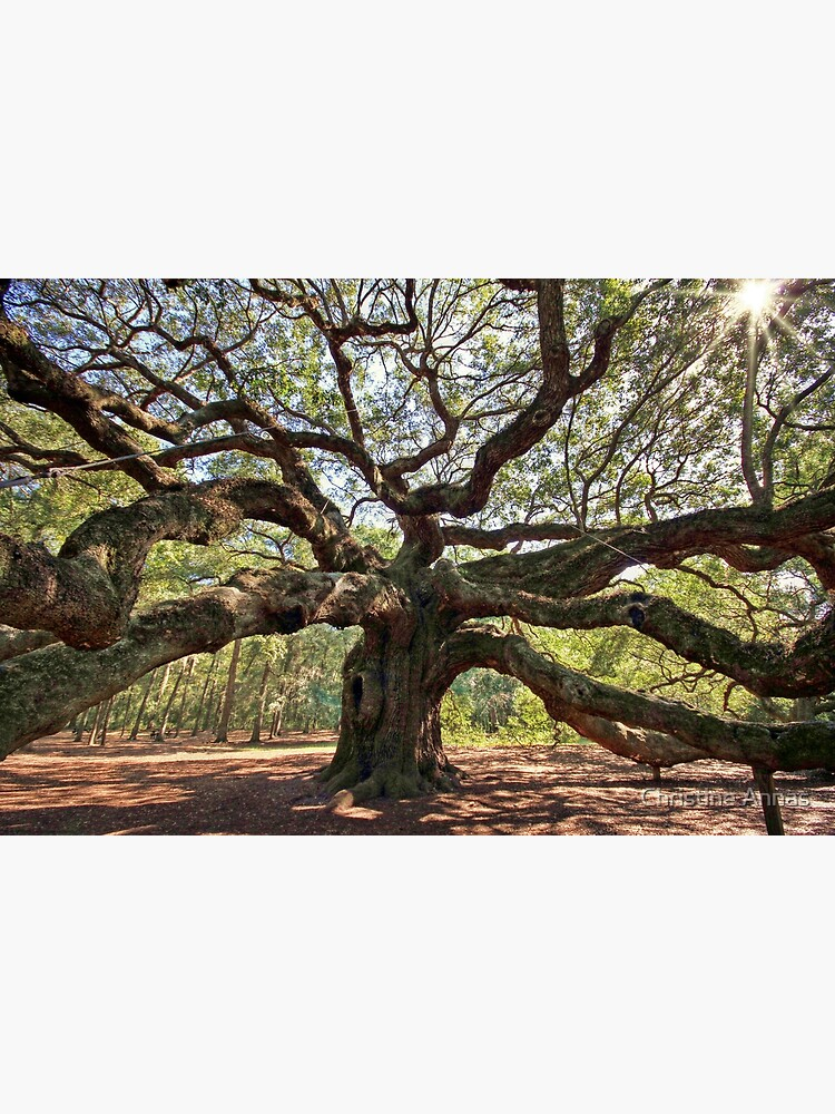 The Angel Oak by 2Bricks