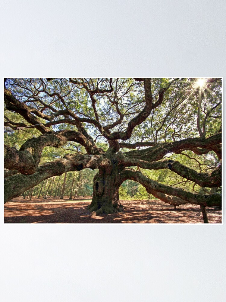 Alternate view of The Angel Oak Poster