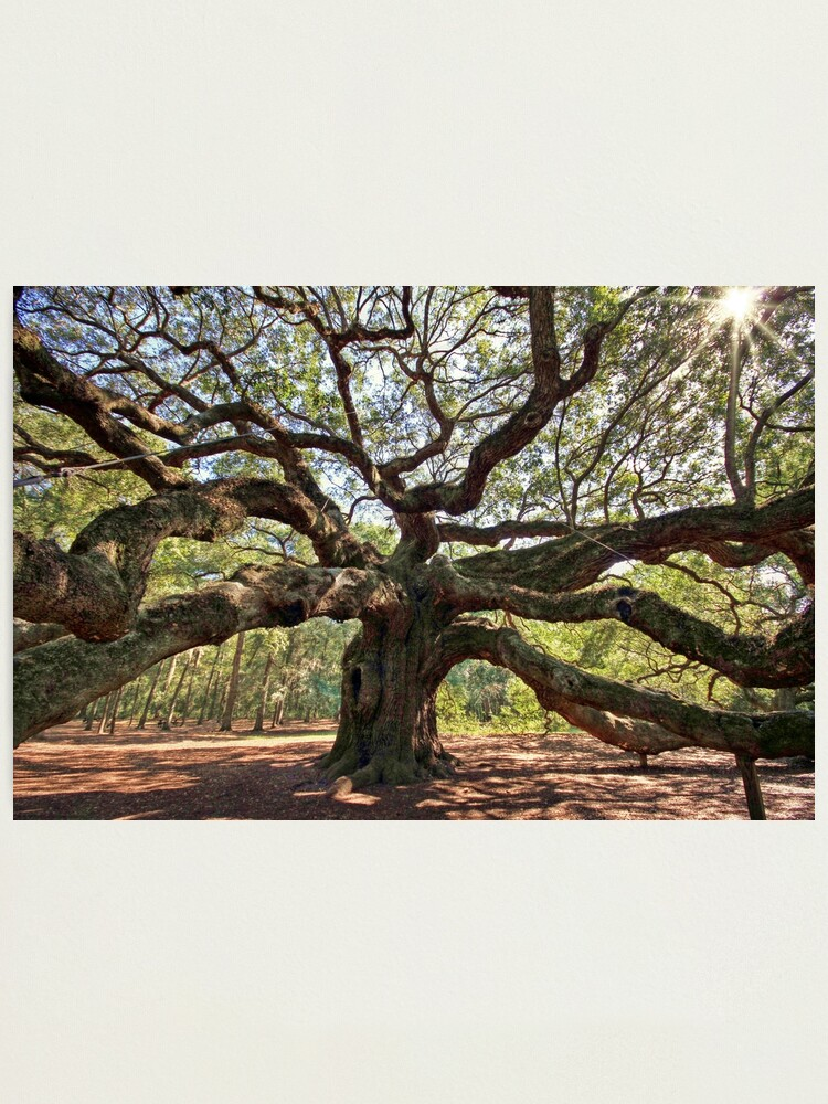 Alternate view of The Angel Oak Photographic Print