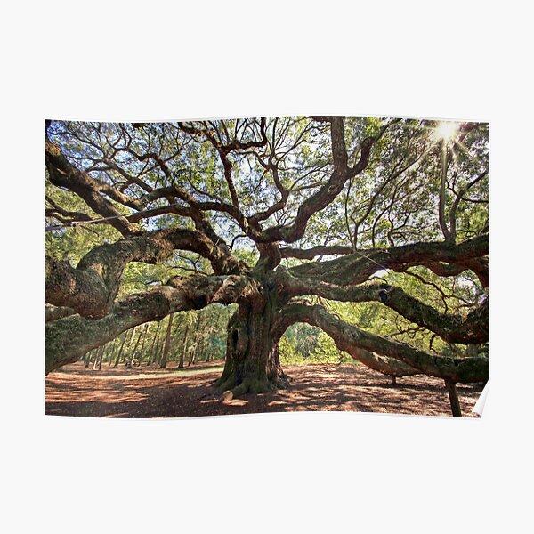 The Angel Oak Poster