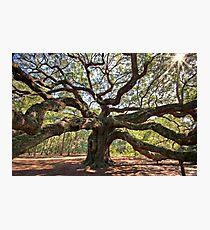 The Angel Oak Photographic Print