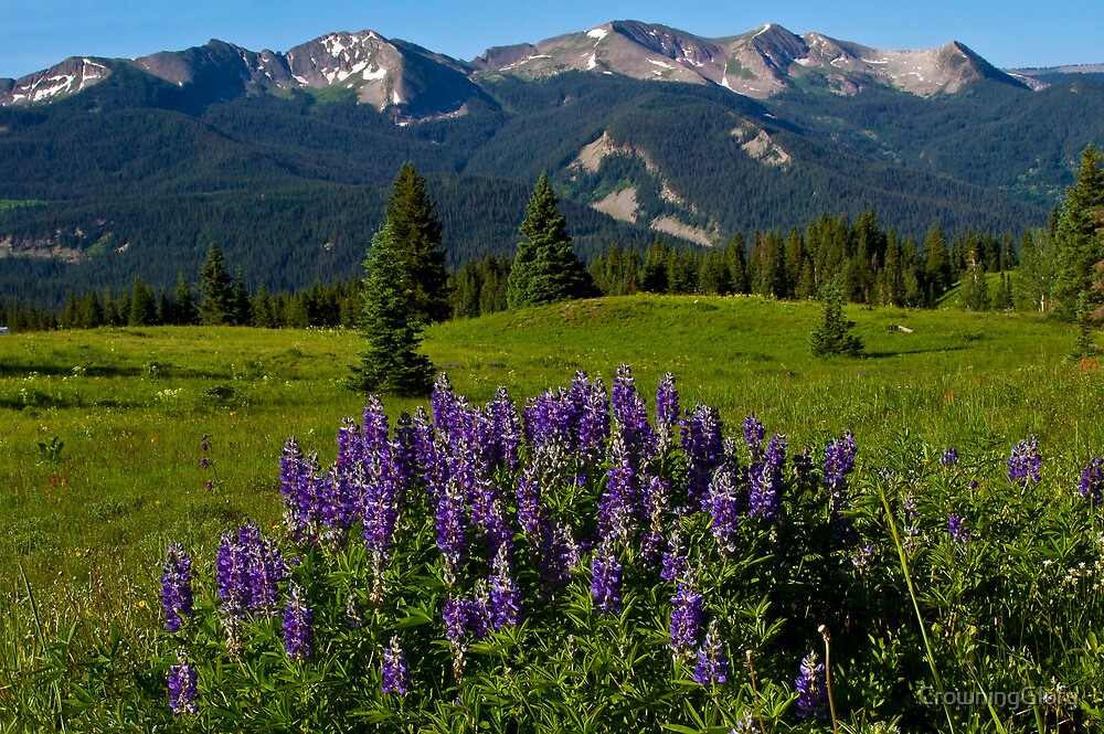 Lupine And The Anthracite Range by CrowningGlory