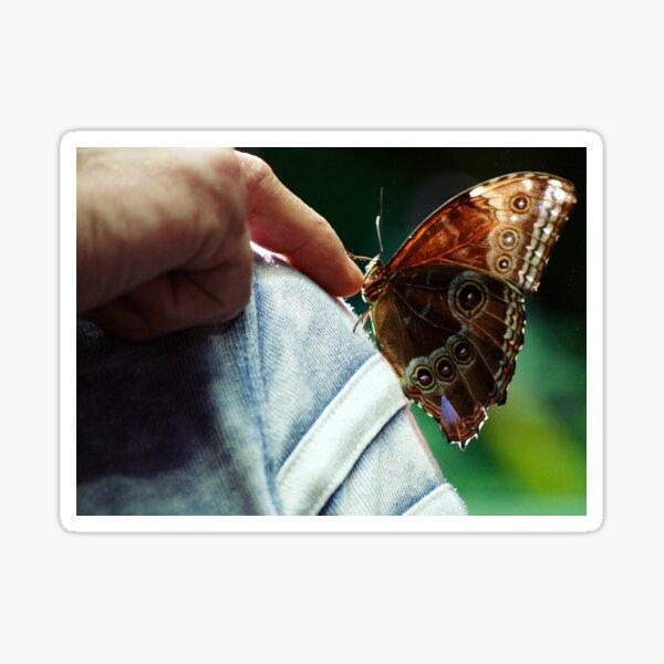 Butterfingers Sticker