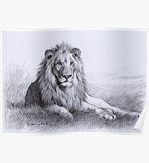 Resting Lion Poster