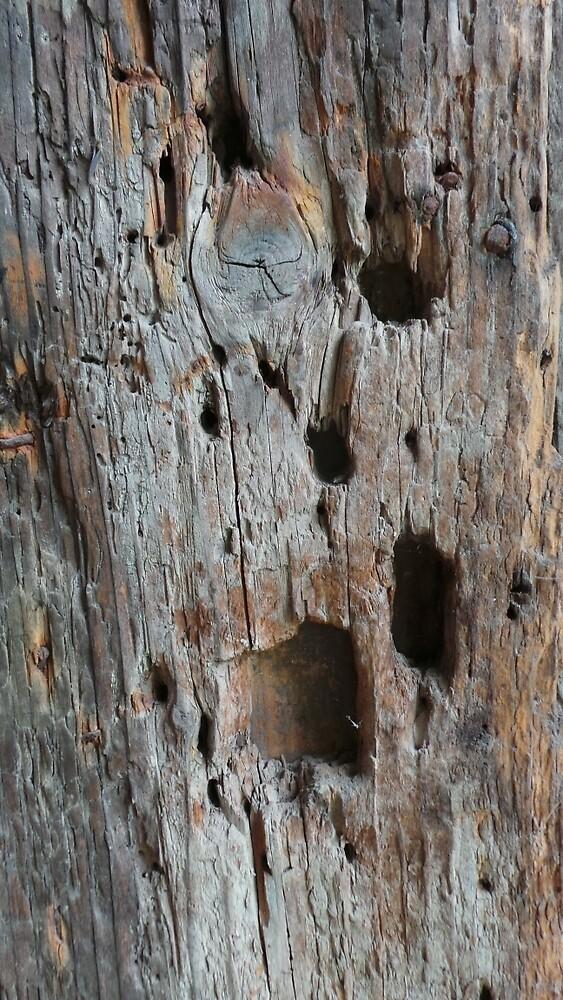 Wood no.1 by Alexandra Romancsak