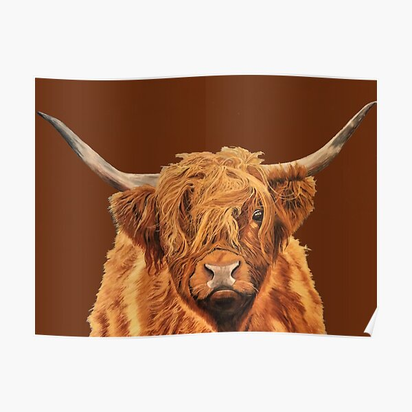 Highland Cow - Looking at You Poster