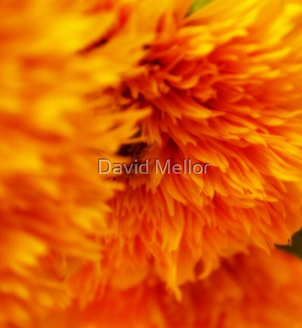 Sunflower by David Mellor