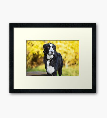 Is the yellow going to get me? Framed Print