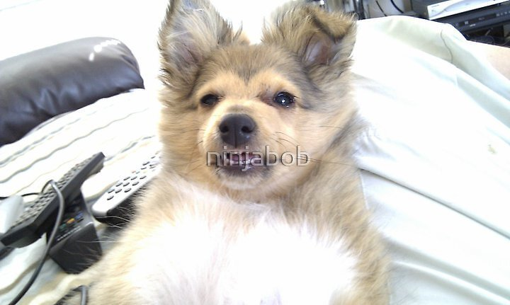 Puppy Bailey.. by ninjabob