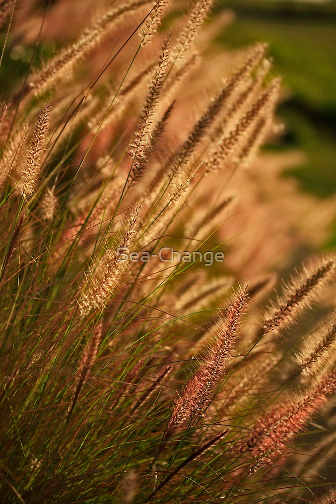 Golden Grass by Sea-Change