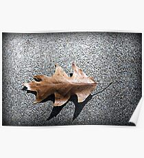 Leaf On The Ground Poster