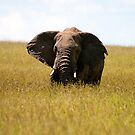 Elephant Wings by PhotoLouis