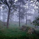In Mist by Martin Griffett