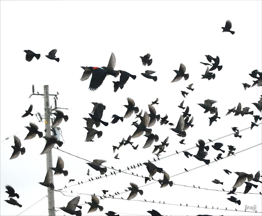 Bird In Red by linaji