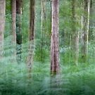 Woodland Impressions by Martin Griffett