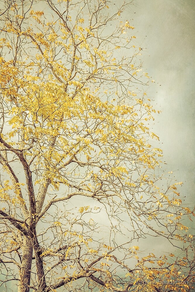 Leaves of Gold Glitter in Autumn Sunlight by Virginia Sanderson