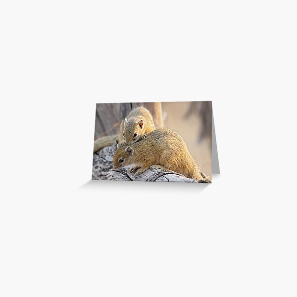 Nibble therapy Greeting Card