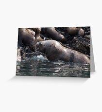 Bull Moose Sea Lion, Juneau, Alaska Greeting Card