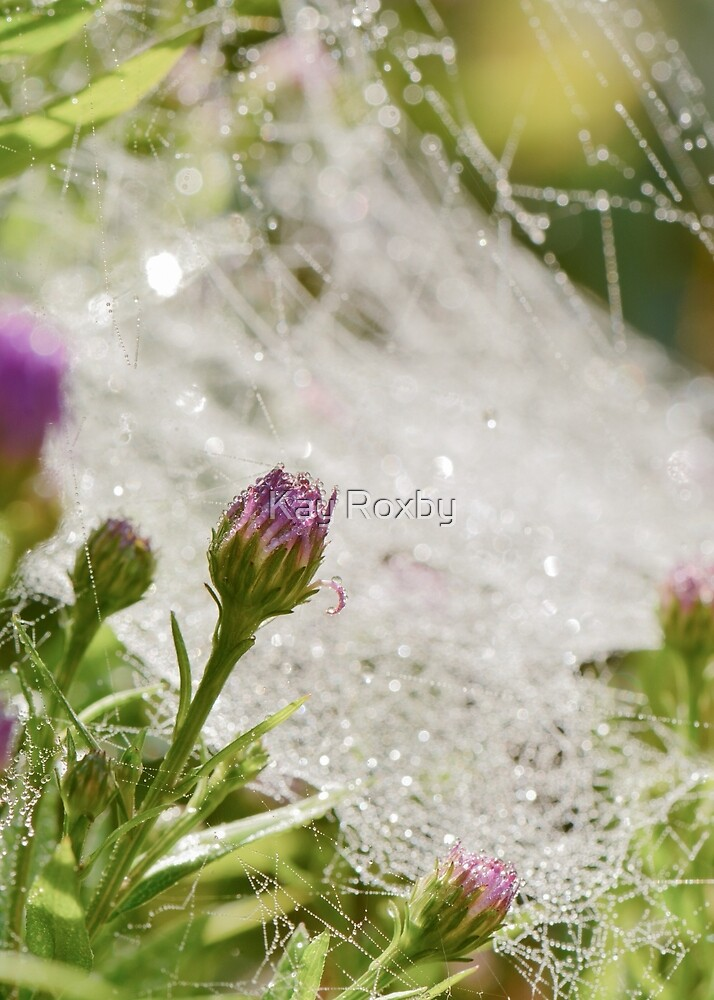 Autumn cobwebs sparkling with dew by Kay Roxby