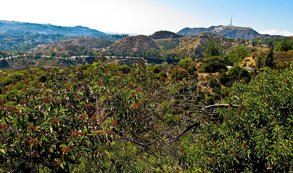 Hollywood View by nicolestamsek
