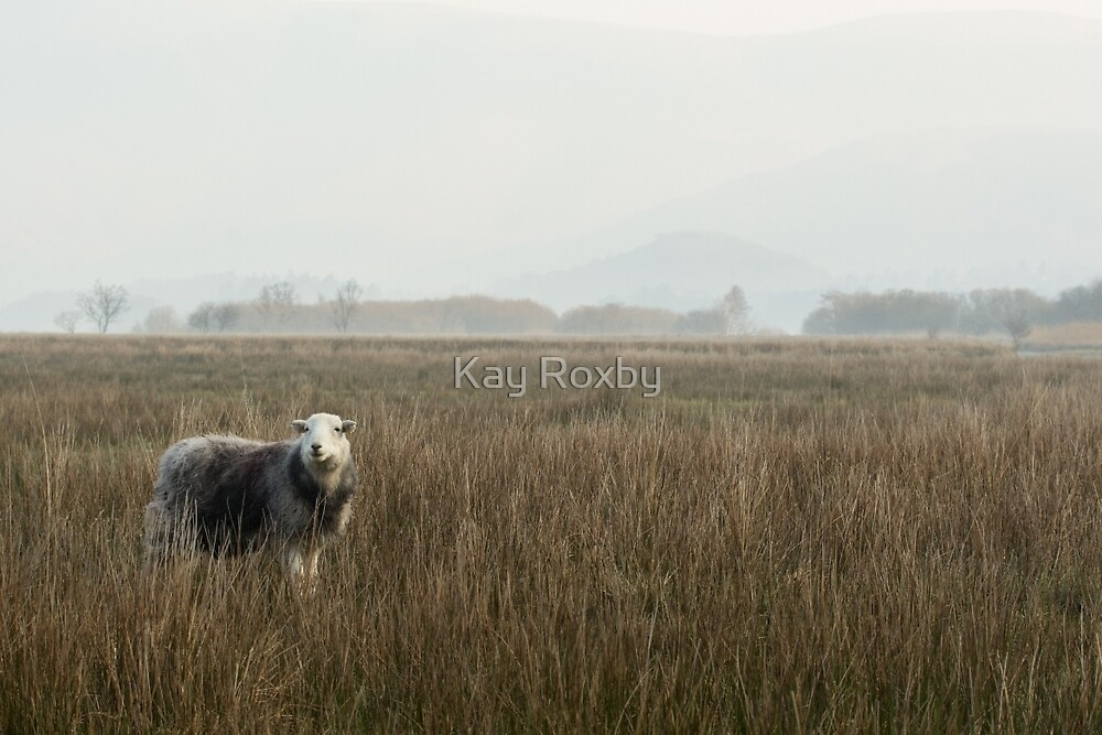 Herdwick sheep in the Lake District by Kay Roxby