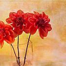 Three Orange Dahlias by Rebecca Cozart