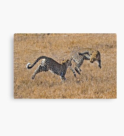 Young Female Leopards Playing Canvas Print