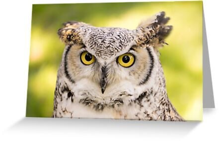 Great Horned Owl by Jim  Hughes
