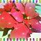 "VOUCHER - A Christmas Card - """"""Gorgeous Flower Cards"""""