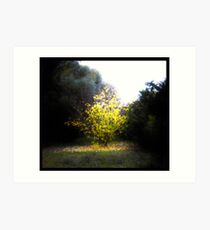 A Tree That Is Bright (It Might Be On Fire) Art Print